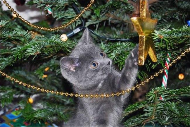 92Naw3GeqM8 - Как нарядить кота на Новый Год? (ФОТО)