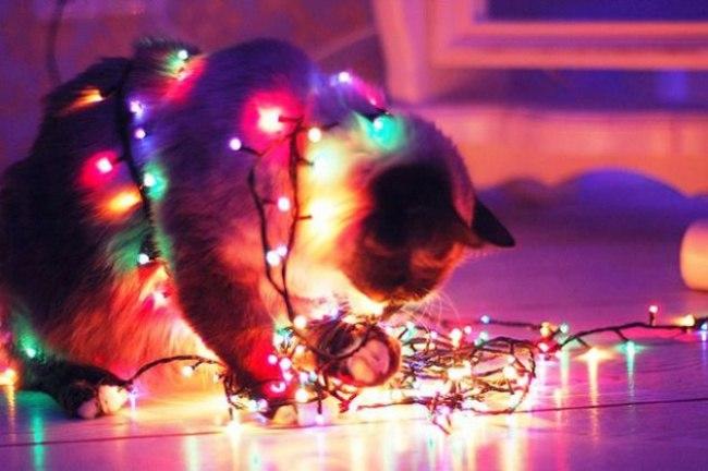 P4xGD UMkRE - Как нарядить кота на Новый Год? (ФОТО)