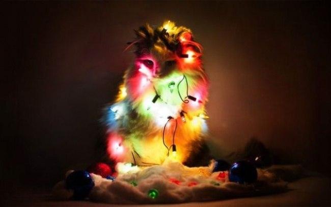 65nCR4YmzJ4 - Как нарядить кота на Новый Год? (ФОТО)