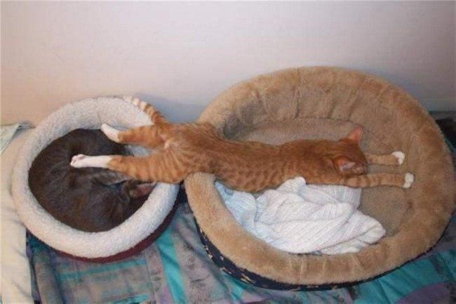 dIyGI tKMUA - Кошачья логика и человеческая - разные правила