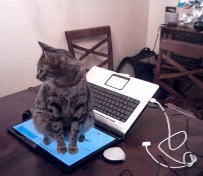 I25TISc4mEg - Кошачья логика и человеческая - разные правила