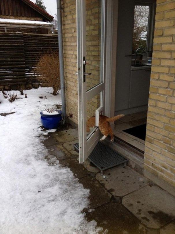 NZpqsjLBFZc - Кошачья логика и человеческая - разные правила