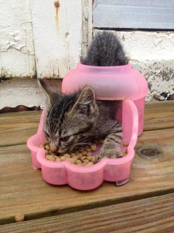 7GyqUcl6kWY - Кошачья логика и человеческая - разные правила