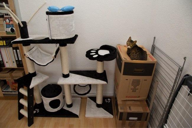 khvIeCjDYss - Кошачья логика и человеческая - разные правила
