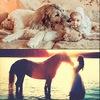 """Pluralis"": фото с лошадьми и другими животными"
