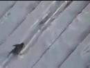 O corvo no telhado.