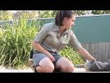 Прикольная коала из Symbio Wildlife Park