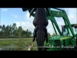 В США застрелили гигантского аллигатора