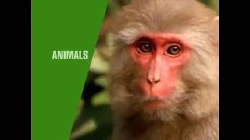 Animals speka 8 35