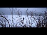 Roniit - Through The Night Teaser