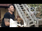 Asian Dog Meat Trade An Interview with Marc Ching of the Animal Hope and Wellness Foundation