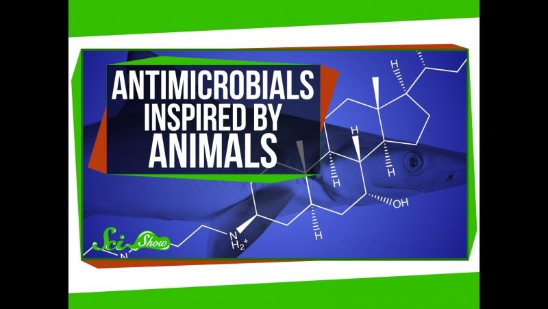 Как животные вдохновляют на создание антимикробных препаратов