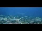 Большое путешествие вглубь океанов 3D/OceanWorld 3D (2009) Трейлер (дублированный)