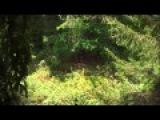 Охота на черного медведя (барибала). Охота в Новом свете. Выпуск 88.