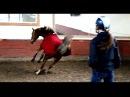 Игривая лошадь Жерди Я не русская о О