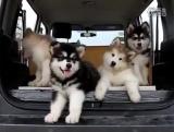 Оу, смотрите, какие они милые!!