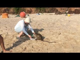 Обезьяний пляж Ко Лан