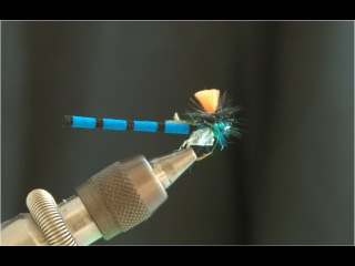 Adult Damsel - Fly Tying Lesson Video Tutorial by Curtis Fry