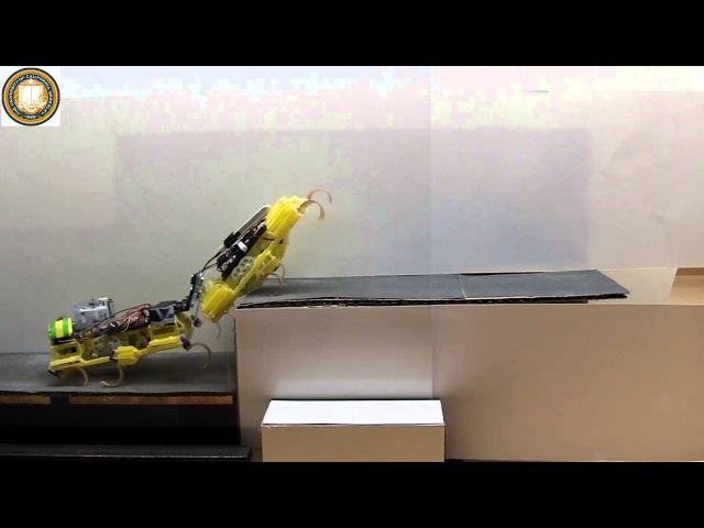 Робот - таракан (Беркли Калифорния)