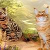Бенгальские Мейн кун кошки котята