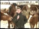 Журналист и кони прикол во время эфира