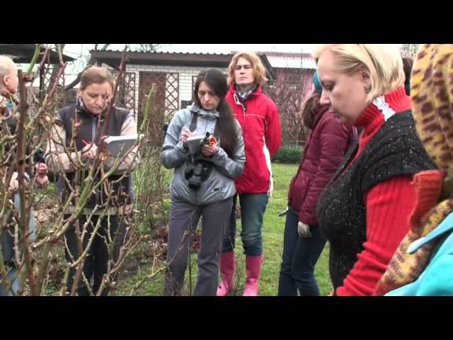 обрезка роз ч2 Мастер класс от Юлии Тадеуш