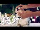 Как чистить зубы собаке - чистка зубов у собак (9)