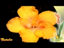Вечность. Цветы в природе - Музыка для релаксации