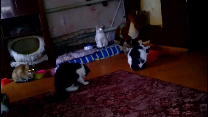 03 мая 2016 Передержка Кошки