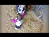 20 животных, отомстивших детям