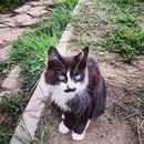Annie Shkutova фото #46