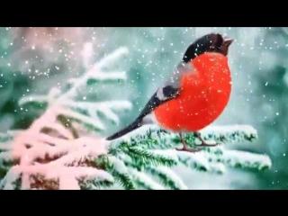 Футаж Зимний Сказка 12