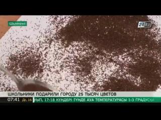 25 тысяч цветов любимому городу подарили школьники Шымкента