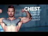 Анатомия мышц и упражнения для набора мышечной массы | С.А.М | STRONG DIVISION |