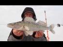 Ловля судака и берша зимой на блесну и тюльку в Камском устье
