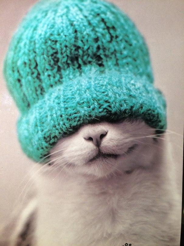 Прикольные, открытки с шапками