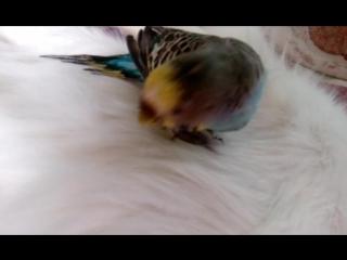 Дружба между птицей и кошкой#1