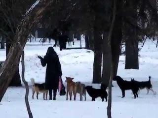 Разгон своры псов петардой