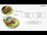 08.Обмен веществ и превращения энергии в клетке. Фотосинтез | Биология 9 класс | ИНФОУРОК