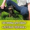 """Гостиница для собак в Липецке """"Лесная поляна"""""""
