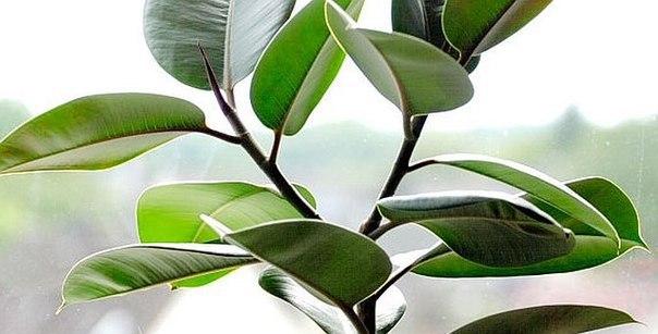 Растительные целители
