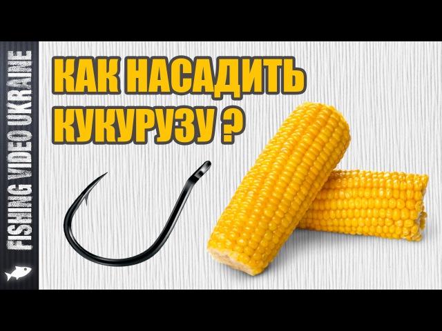 Как насадить кукурузу на крючок Четыре способа HD