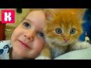 Кошка Мурка питомец Кати и Макса VLOG Покупаем все необходимое для кошек
