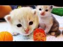 ★ КОШКИ В НОВОМ ДОМИКЕ Видео Для Детей ПРО КОШКИ Play with Cat Funny Cats Video