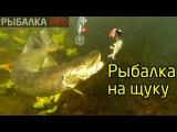 Простая рыбалка на щуку в Самарской области