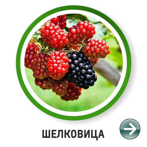 new.vk.com/album-118906825_230379224