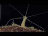 Water Life | Вода - линия жизни 08. Полезная вода (2009) HD