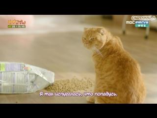 Кошка моей мечты / Imaginary Cat [6/8]