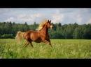 Далеко ускакала в поле молодая лошадь - Барбарики