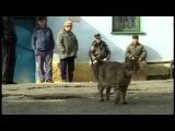 Александр Казанцев ( Сотник ) Сломанная зона